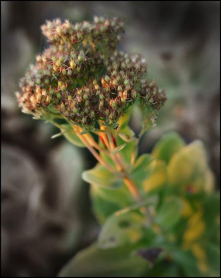 strange_flower.jpg