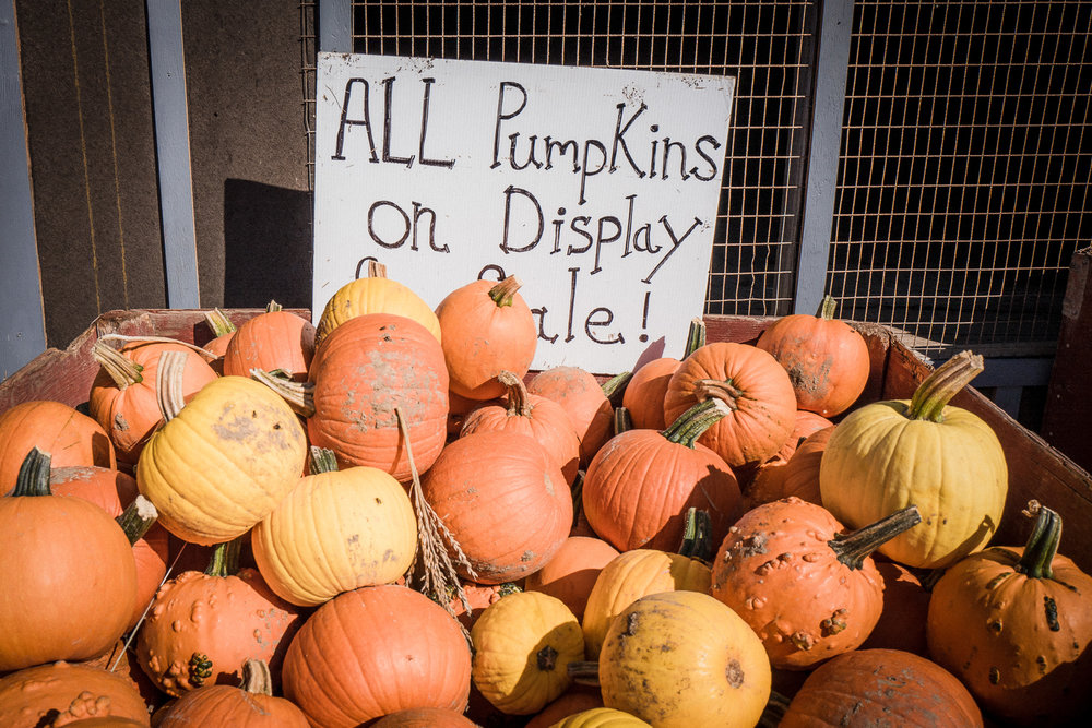 Pumpkin-and-Apple-Picking2017-1040375.jpg
