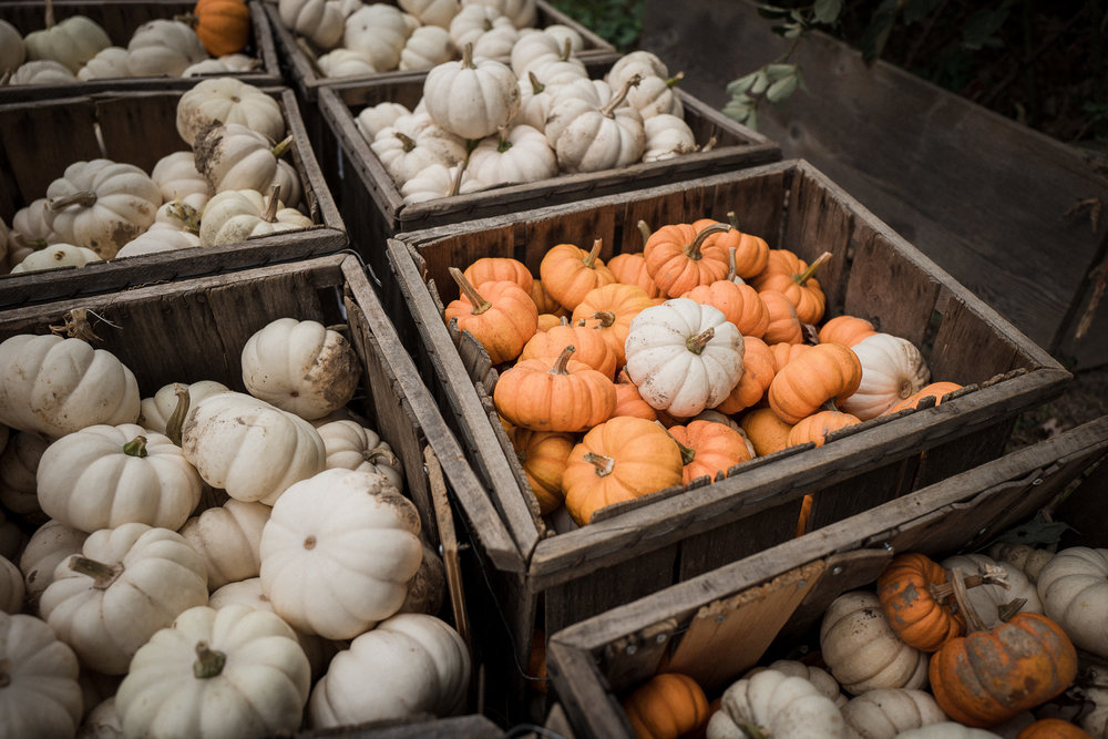 Pumpkin-and-Apple-Picking2017-1040429.jpg