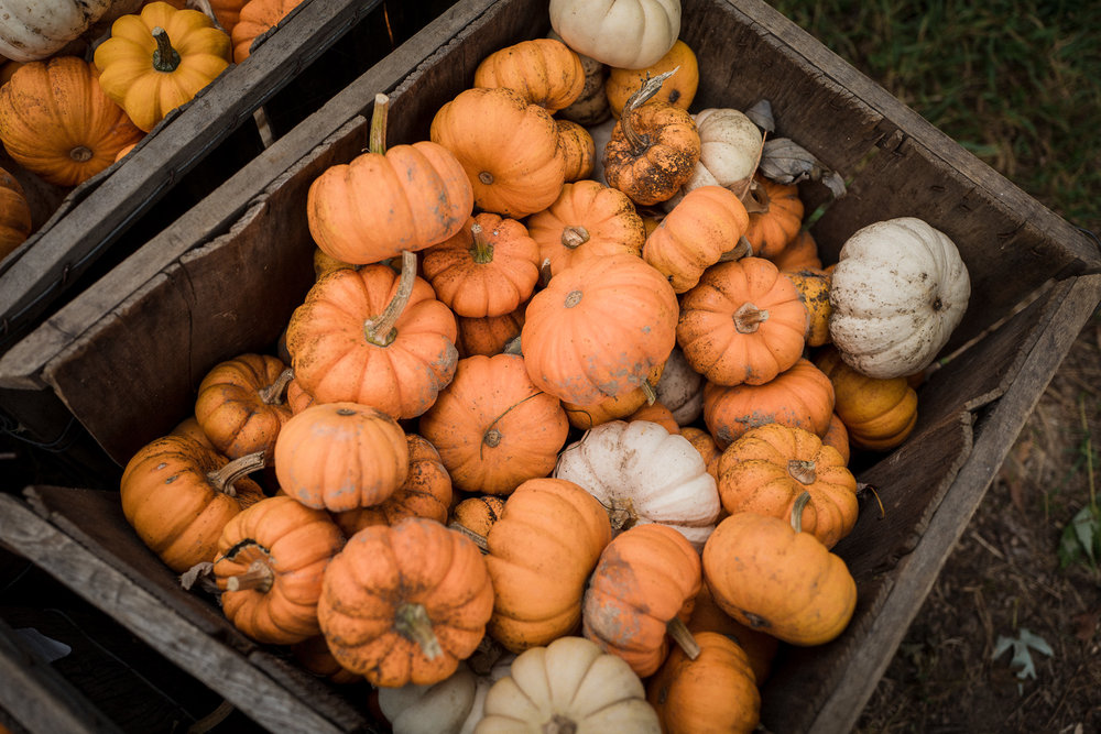 Pumpkin-and-Apple-Picking2017-1040427.jpg