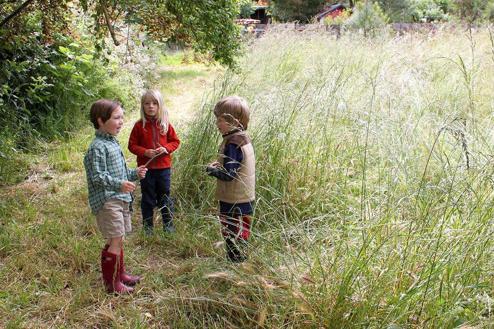 meadow2_2015.jpg
