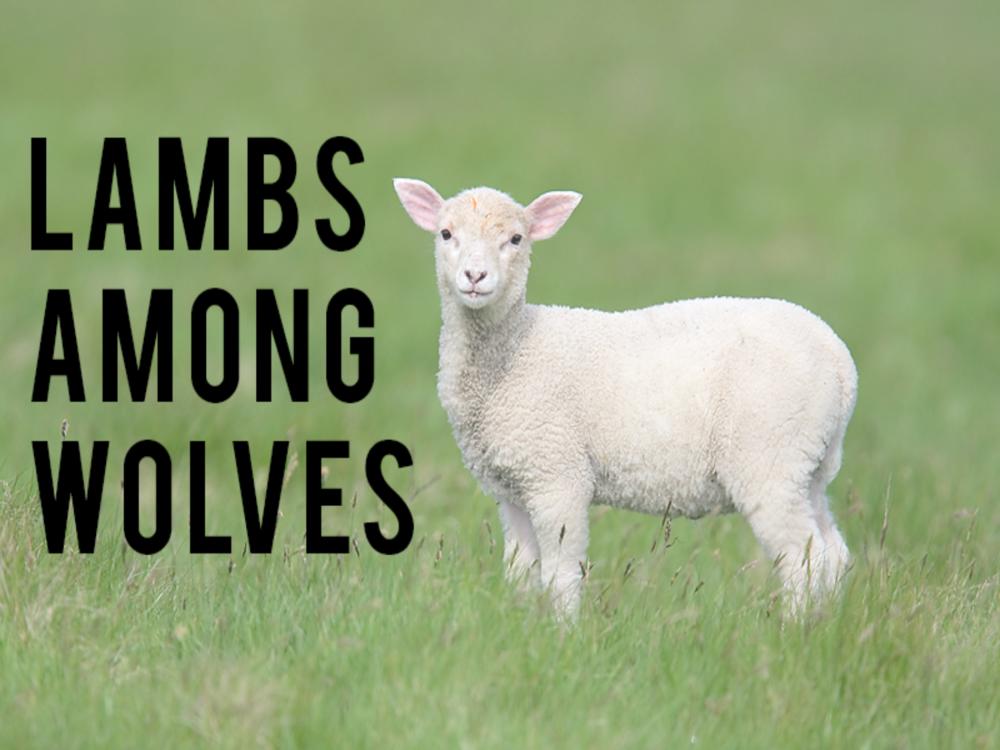lamb among wolves.png