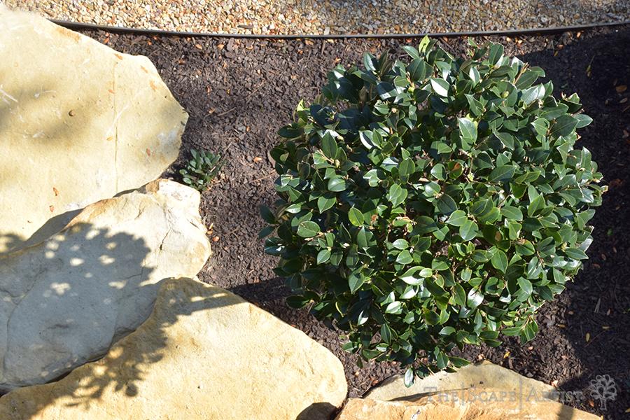 landscaping_ballarat_home-01.jpg