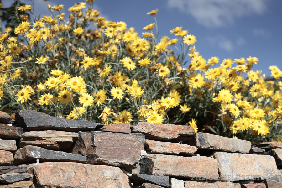 landscaping_ballarat_home-04.jpg