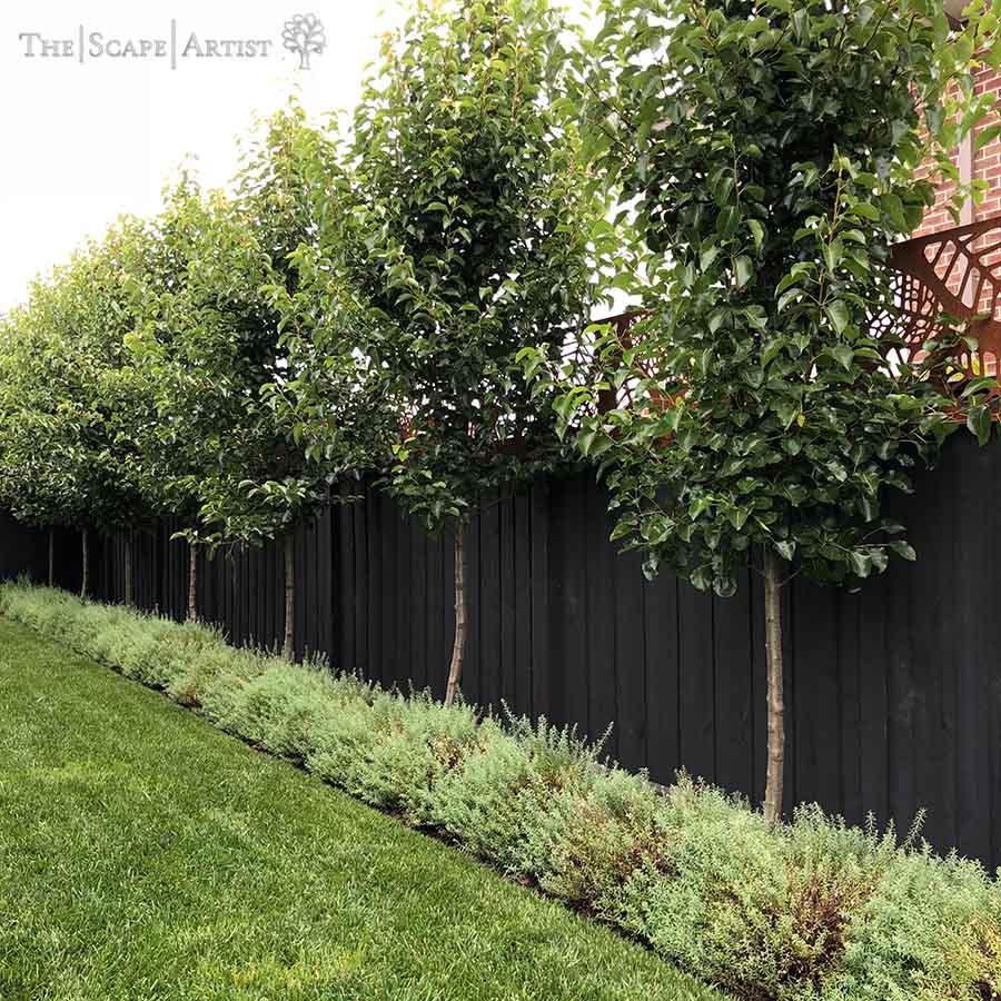 landscaper_ballarat_new-garden_alfredton_10.jpg