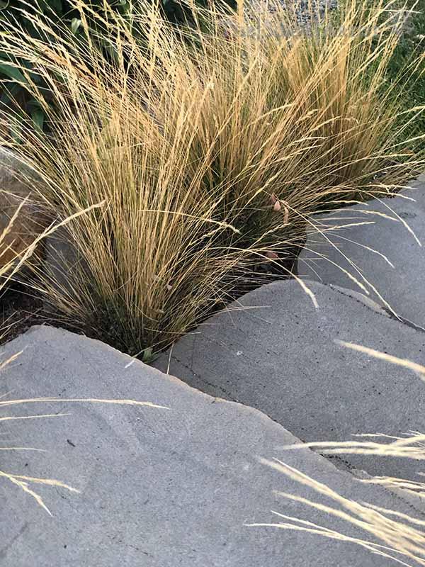 landscaping-garden-design-ballarat-moola_33.jpg