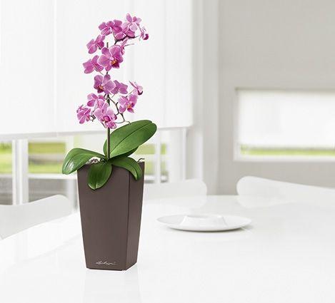 MaxiCubi_Espresso with_Orchid.jpg
