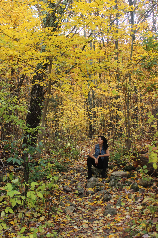 Yellow trees, Upstate NY
