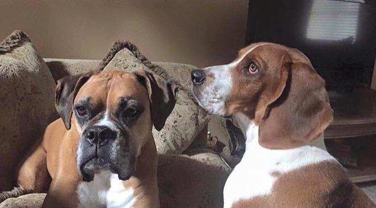 Roxy and Jerry Lee got loose. The Boxer is still missing. If you're of the praying sort, it would be appreciated.