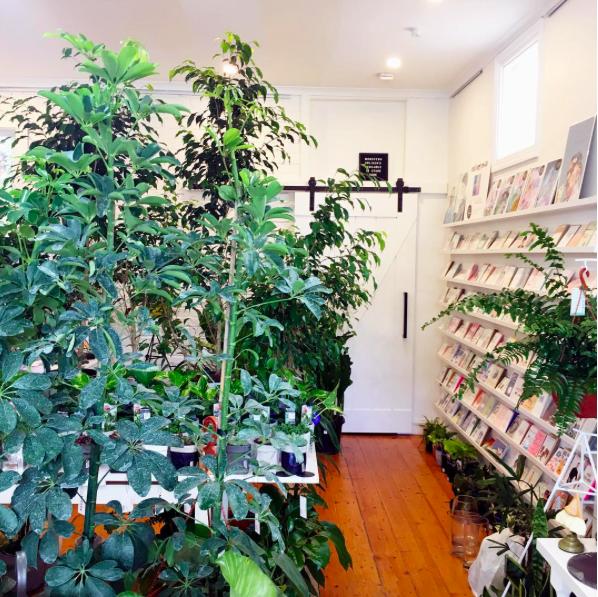 Umbrella Plant Tree