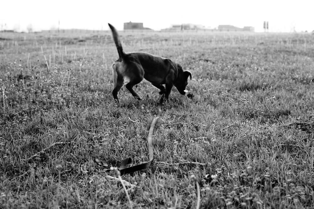 shotthedog.jpg