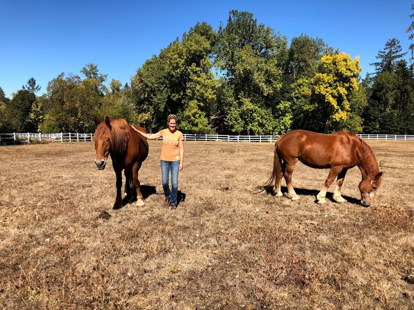 Sugar and Grandpa graze in their new pasture with their foster family. These two are the luckiest drafts in the world— their foster family generously offered to take both horses so we didn't have to separate this bonded pair.