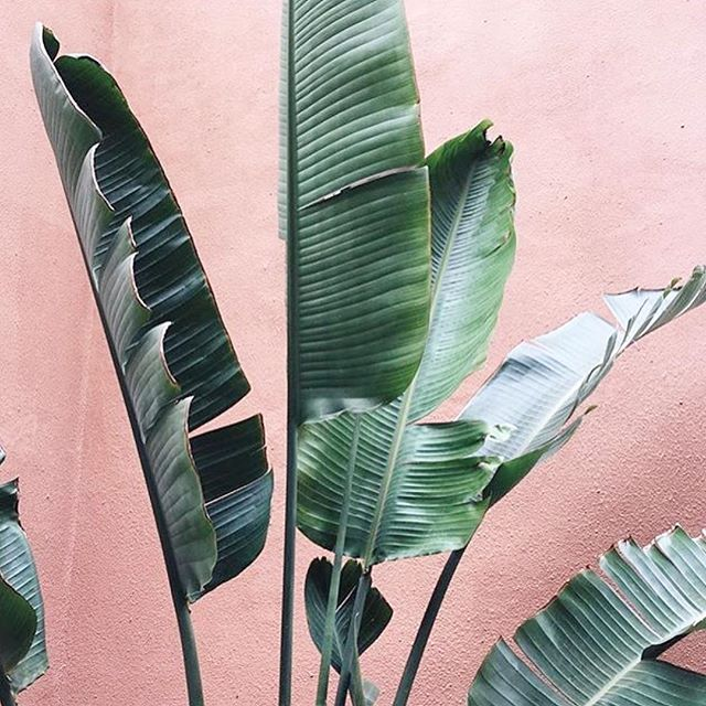 Keeping it Green. 🌱 #ecogirlbheavior #shopfarai 📷 @juliaadang @plantsonpink