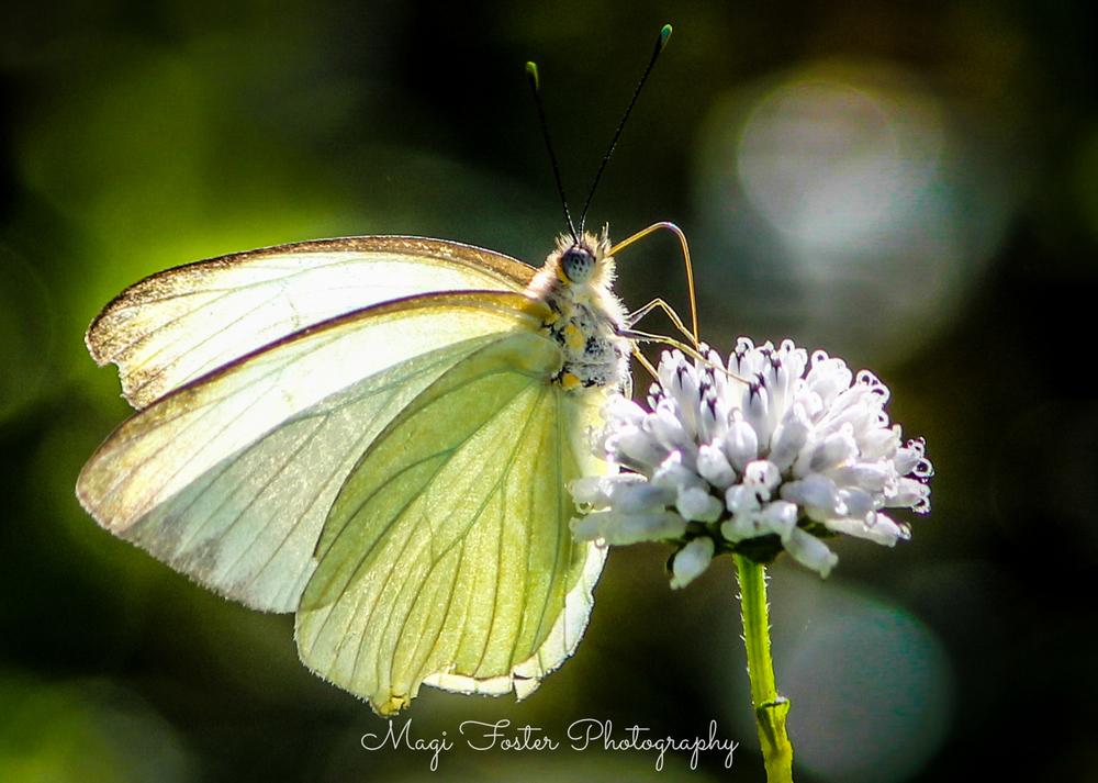 BVI_Moth-2.jpg