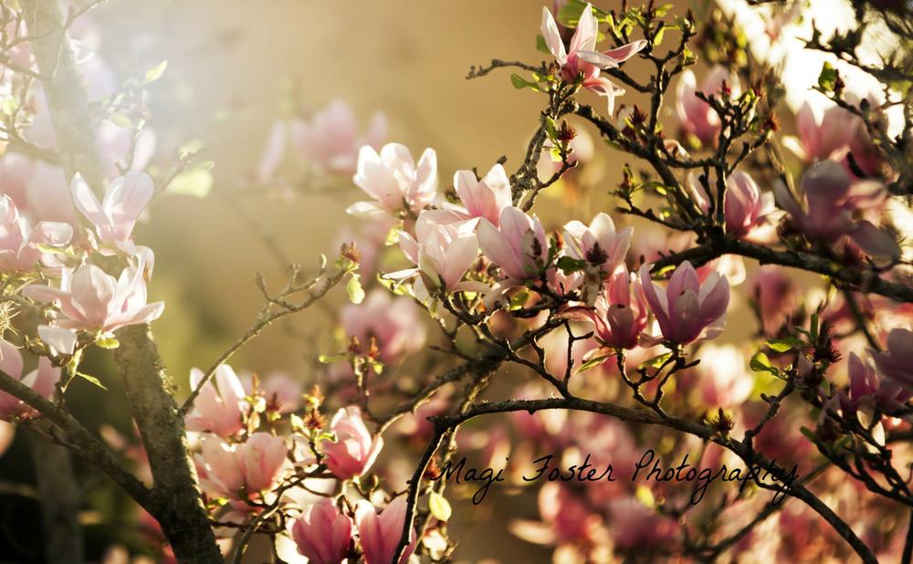 Jaxflowers-2351.jpg