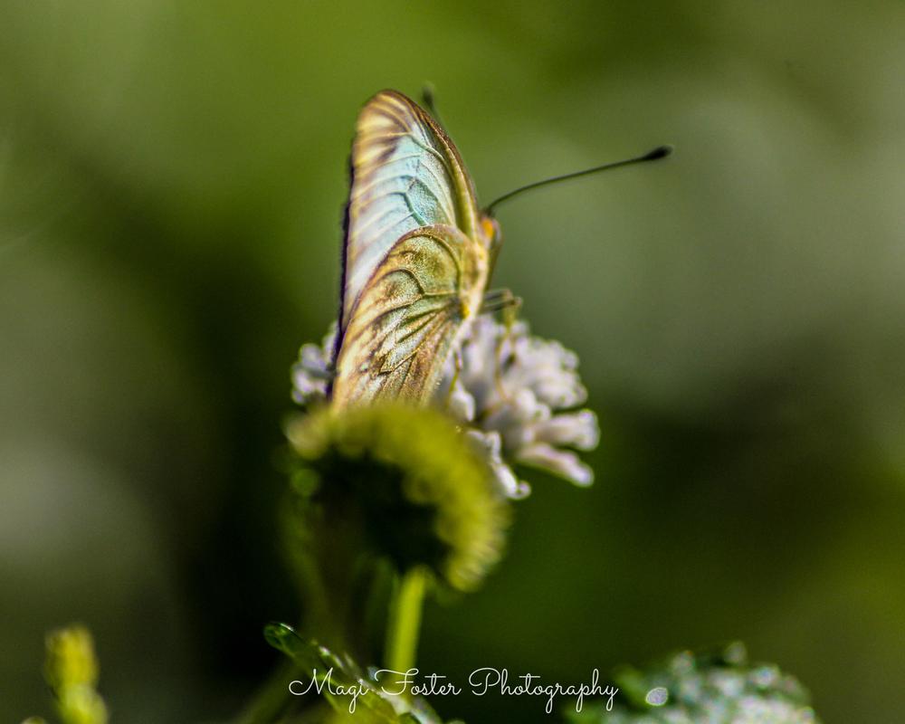 BVI_Moth-110.jpg