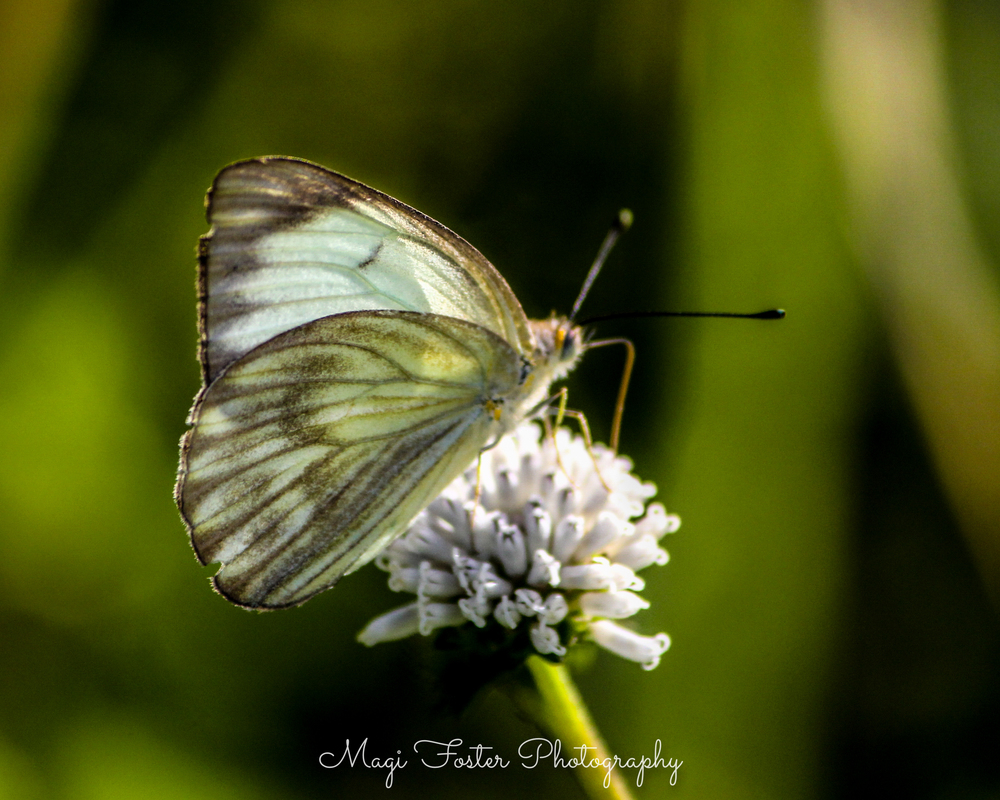 BVI_Moth-134.jpg