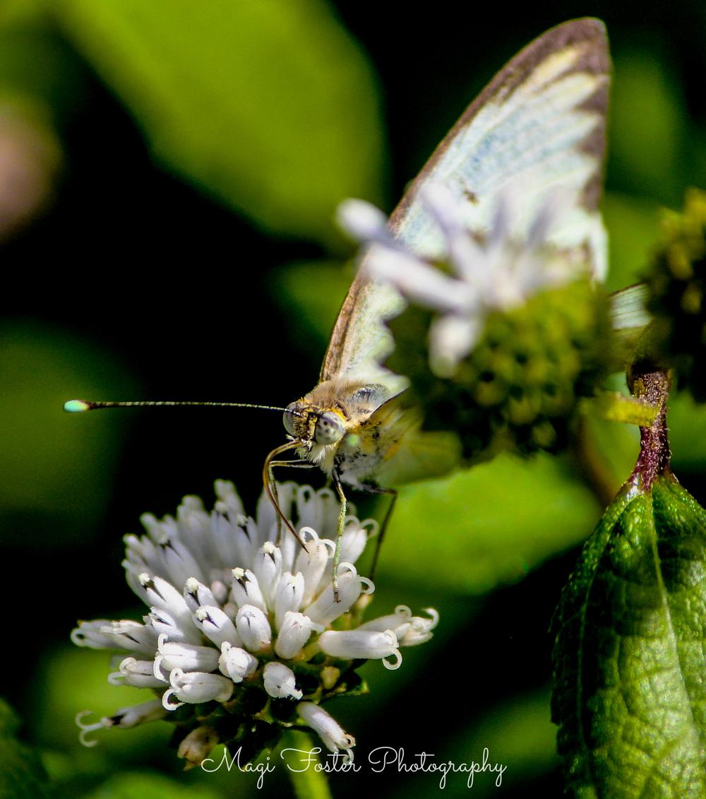 BVI_Moth3-2.jpg