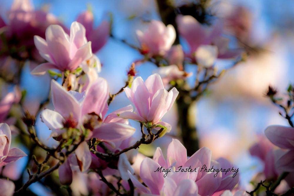 Jaxflowers-2350.jpg