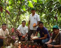 Maretai Cacao.jpg