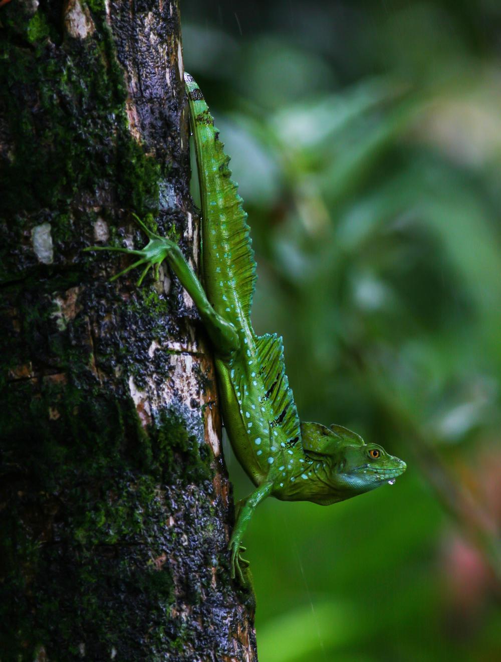 Biodiversity, La Tortuga Feliz, Costa Rica