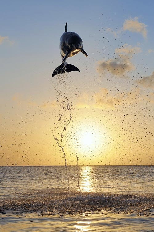 A dolphin jumps