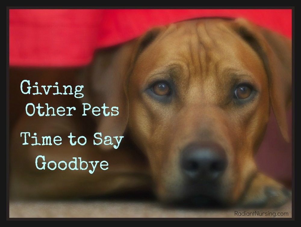 Give other pets time to say goodbye to their furry companion.