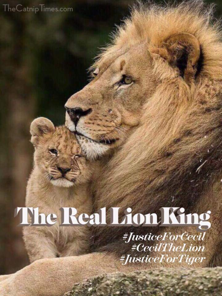 Justice for Cecil the Lion came to the attention of many on Twitter. Petitions were signed for extradition of the hunter.