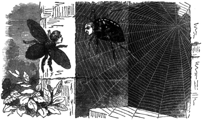 A bee and a spider's web. The story of a honey bee rescue.