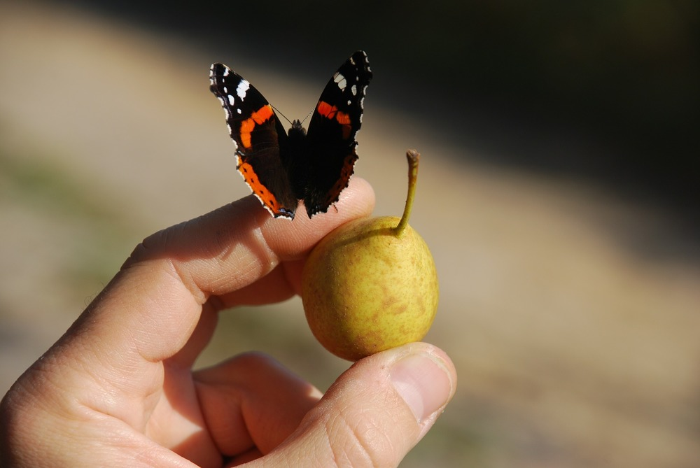 A butterfly lands on a hand. A welcome sight.
