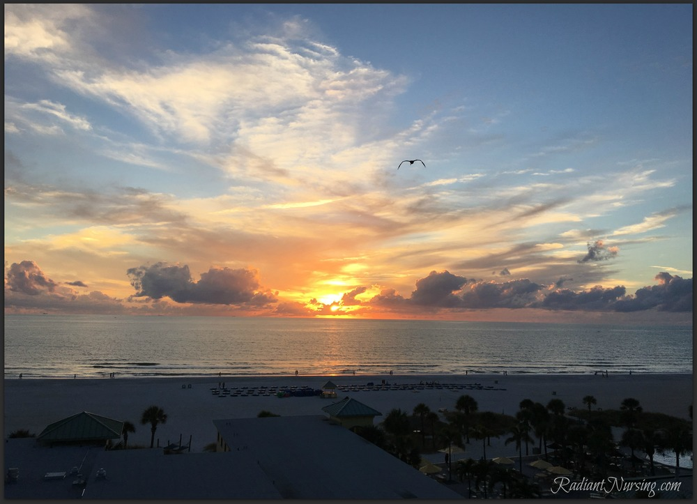 A sunset and a seagull inspire us from the beaches of Florida.