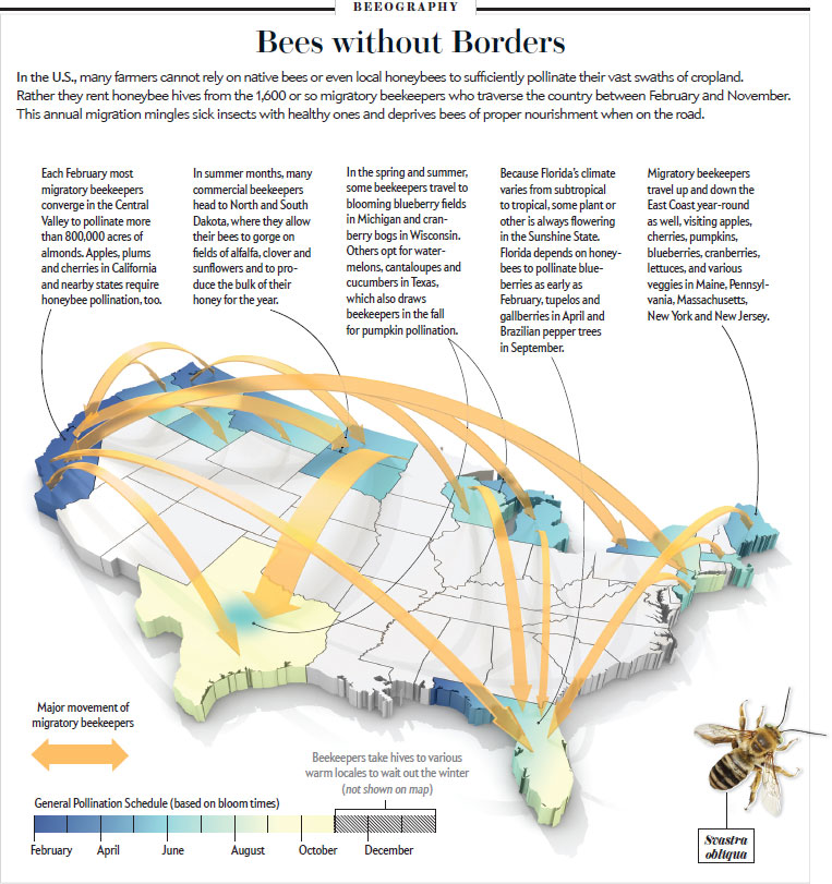 Bees are trucked around the country in their beehives. It's not terribly healthy for them.