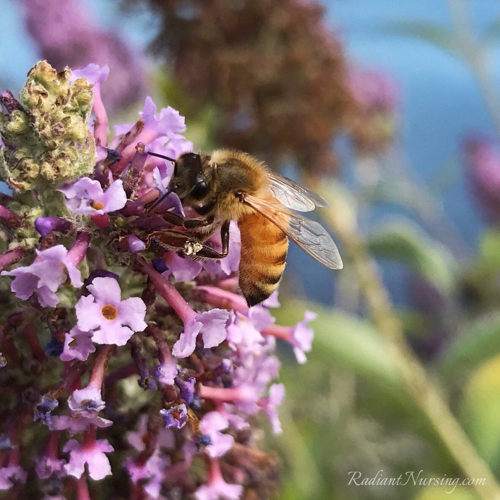 Honey bees need wild flowers to sustain them too.