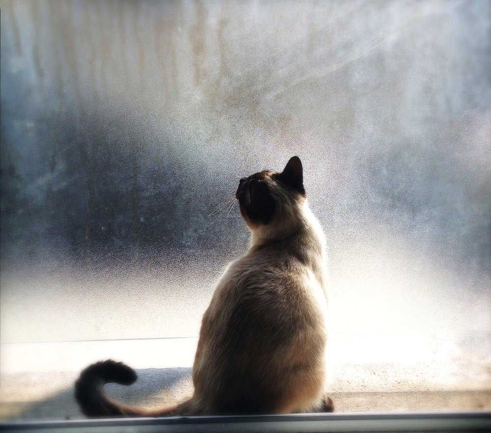 Guidance for when we have to say goodbye to our pets. The Radiance Technique® supports you.