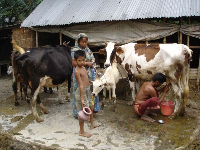 Milking-2.jpg