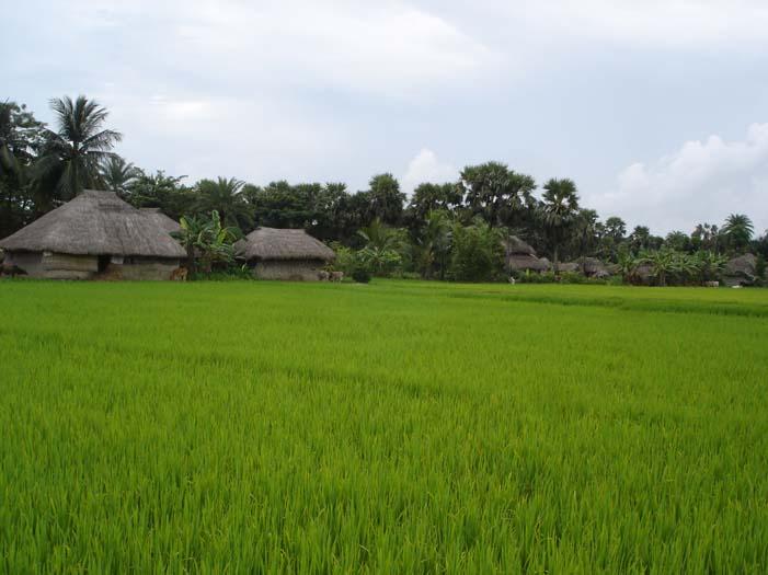 Farm Landscape Joygopalpur.jpg