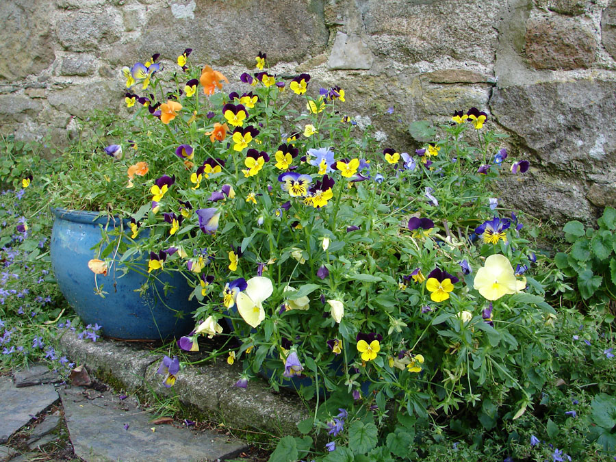 Flower Bowls.jpg