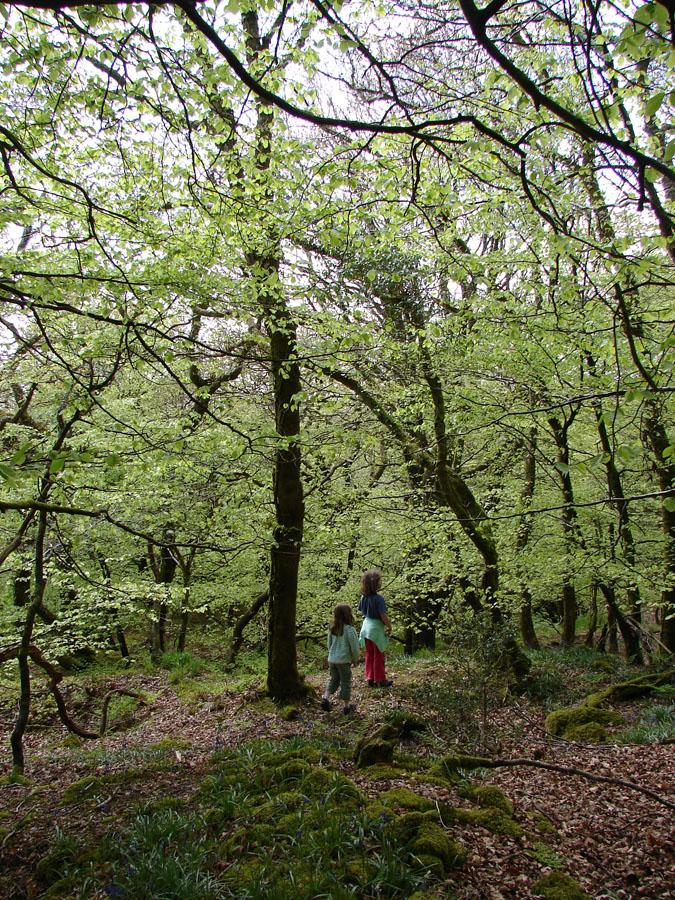 In Woods.jpg