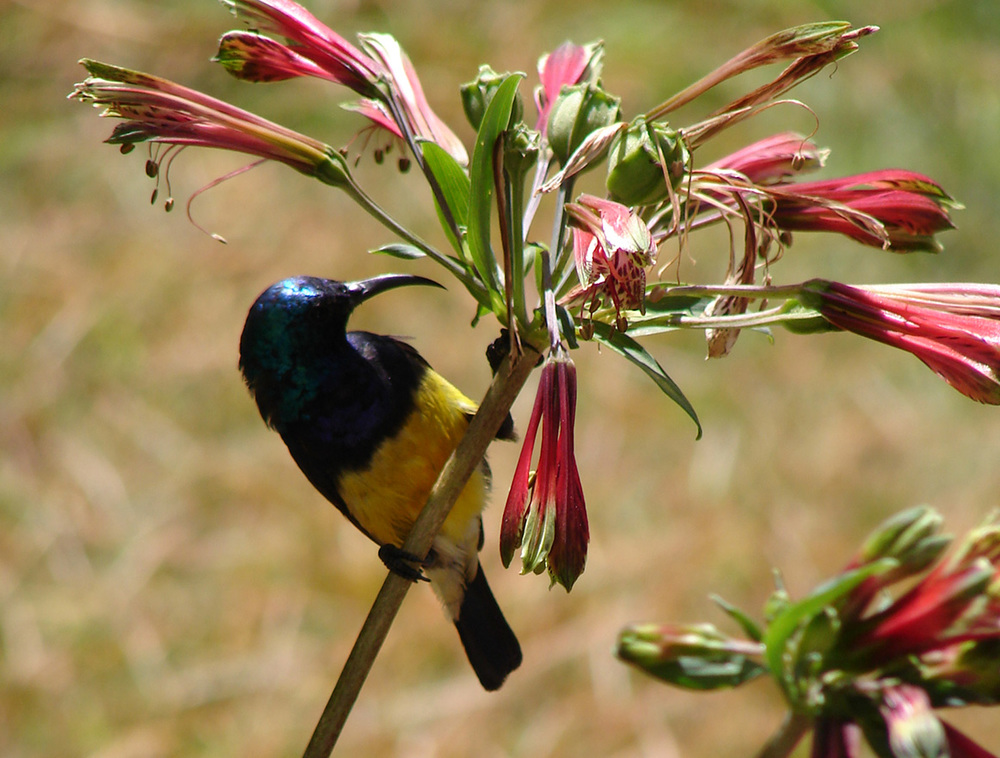 kenya-birds.jpg