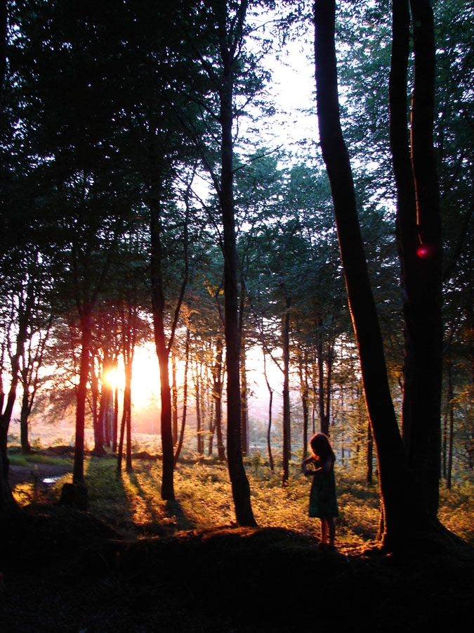 Sunset Woods 1.jpg