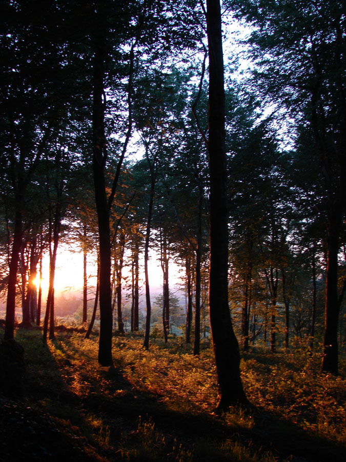 Sunset Woods 2.jpg