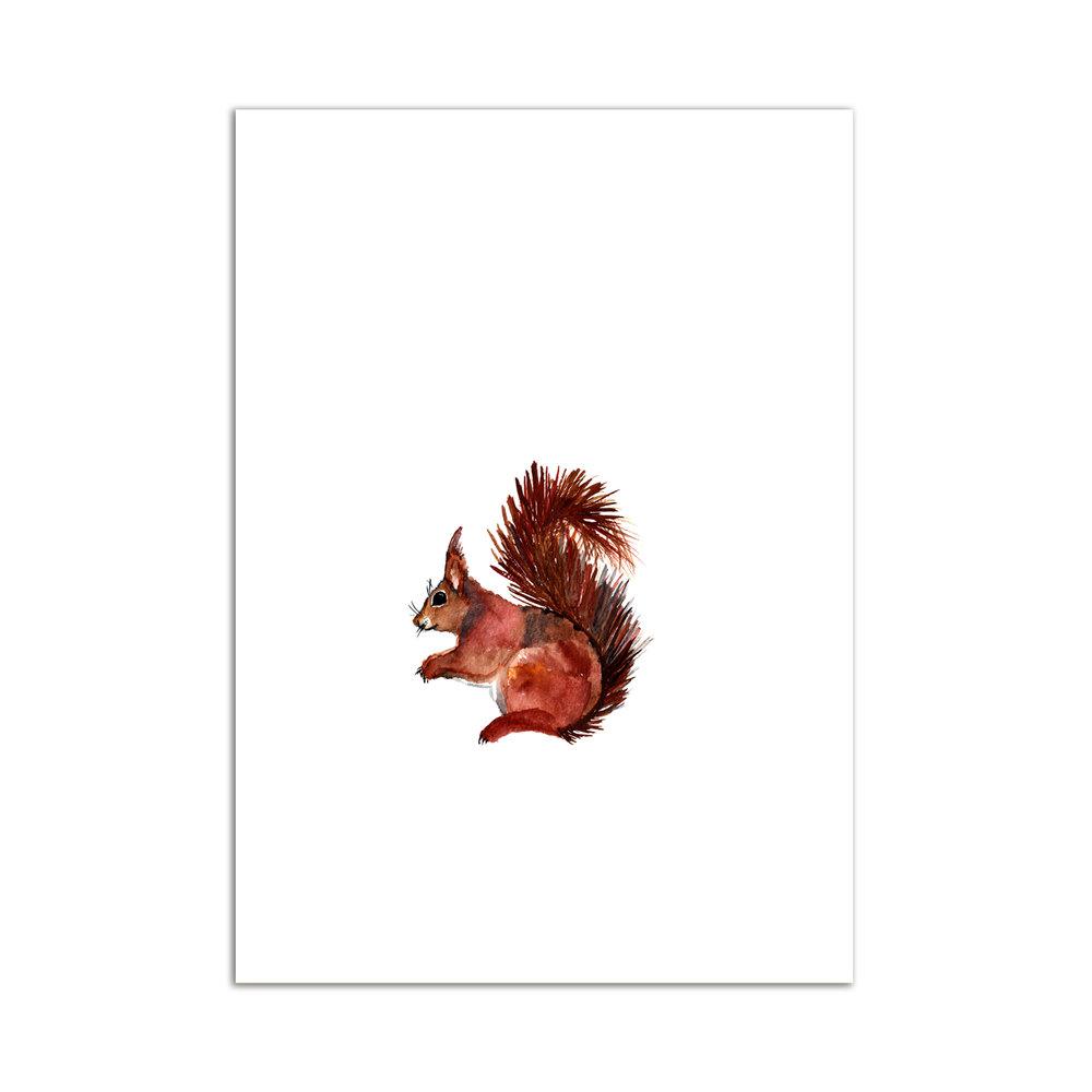écureuil aquarelle studio le Héron