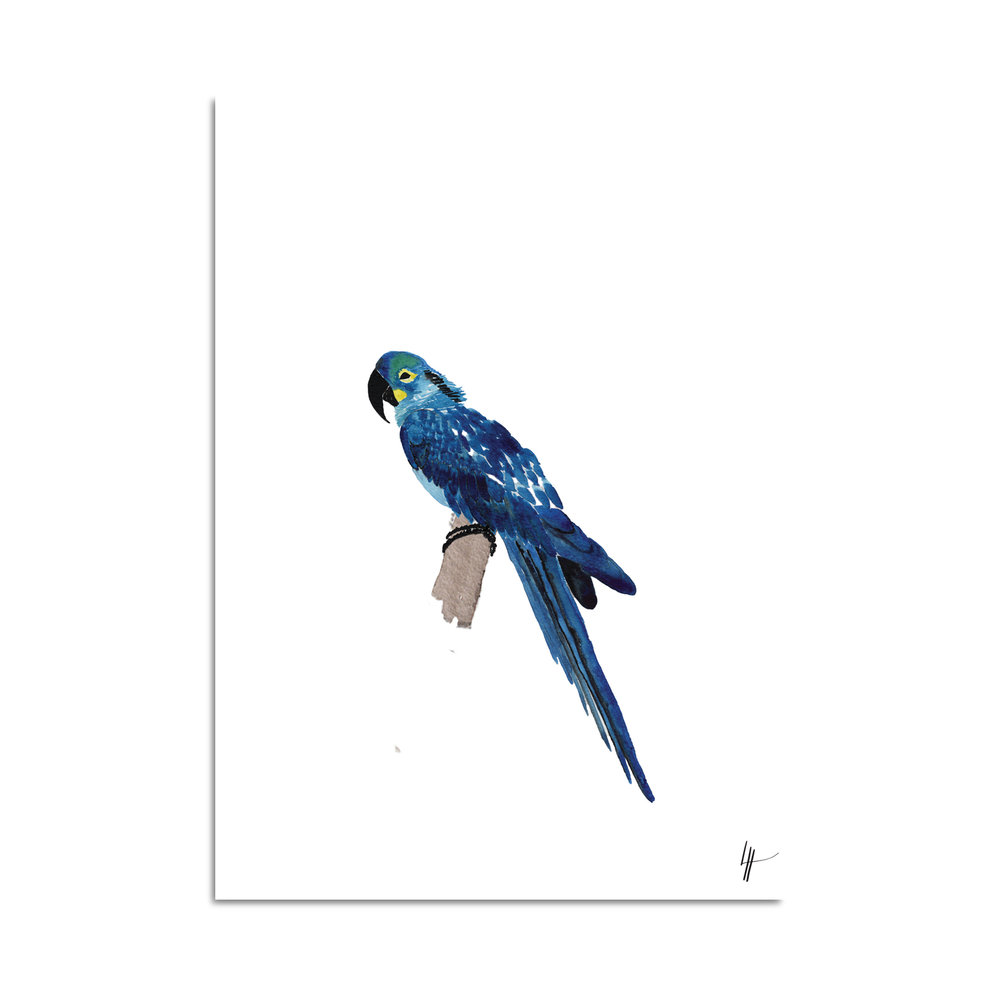 perroquet aquarelle studio le Héron