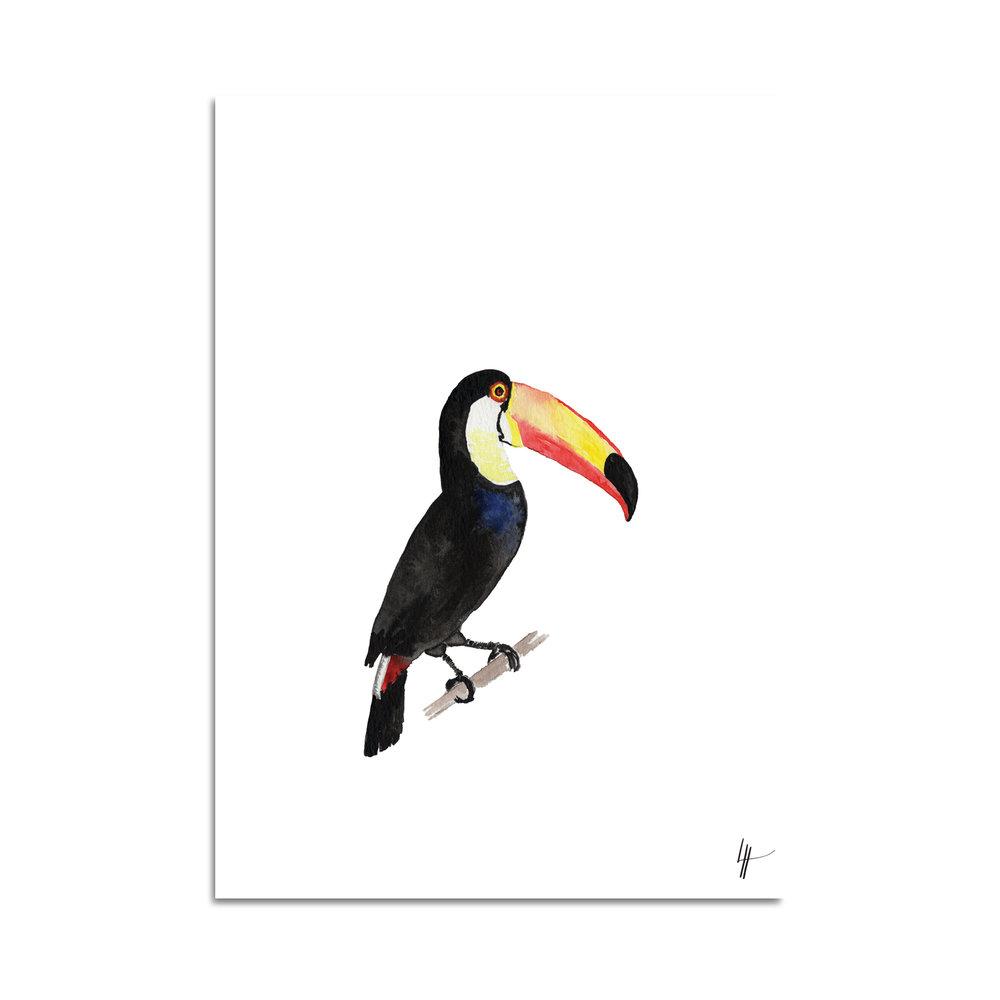 toucan aquarelle studio le Héron