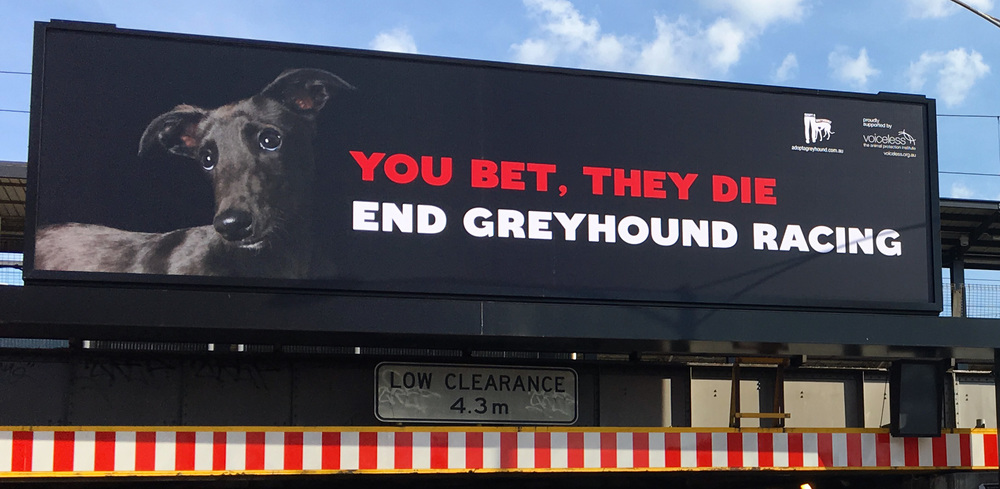 Billboard on Punt Road, above Richmond Station. Greyhound photo by Alex Cearns / Houndstooth Studio.