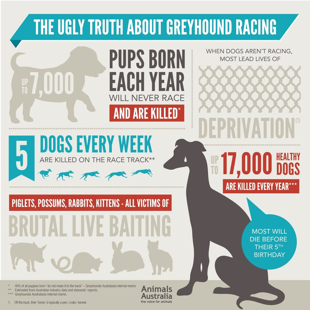 Infographic by  Animals Australia