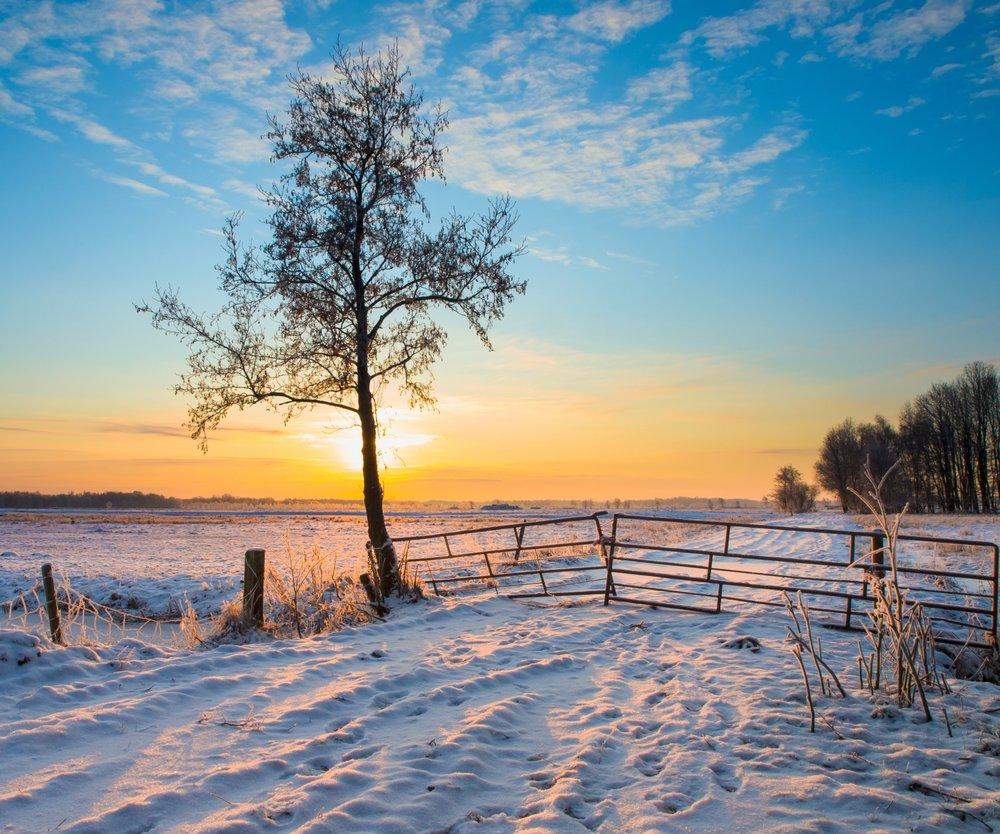 Winter sunlight r.jpg