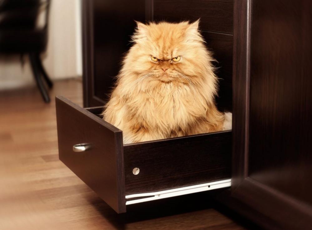 Behöver du ett bättre sätt att säkerhetskopiera dina dyrgripar?