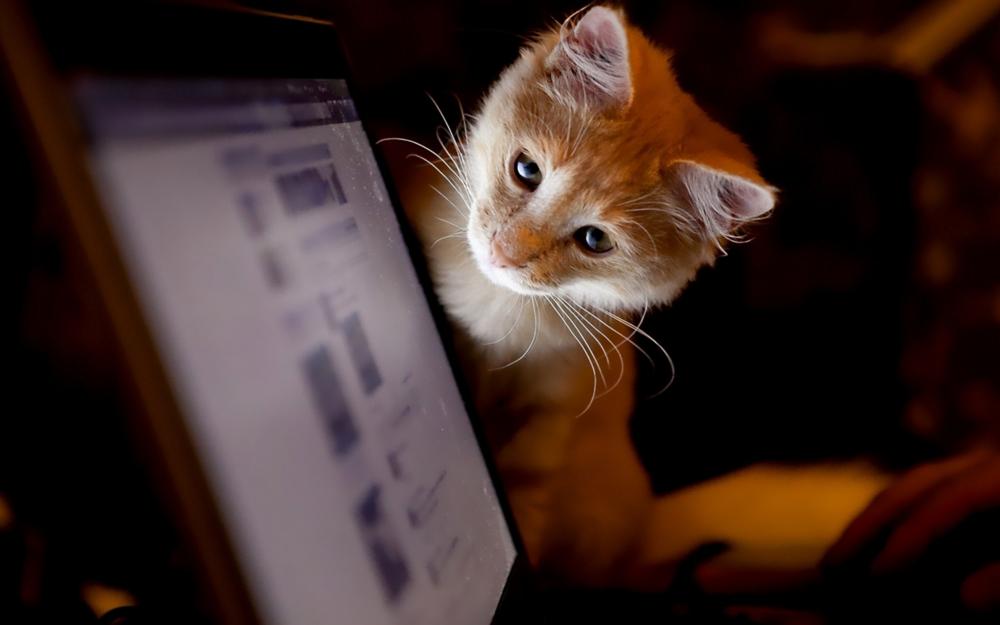 Letar du efter en bra hemsida som är skön att titta på?