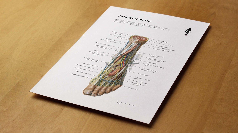 Medizinische Illustration über die Anatomie des Fusses ... — Nadja ...